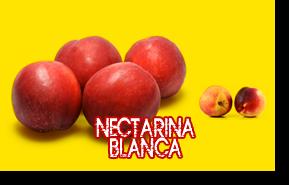 Nectarina Blanca